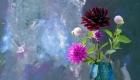 Rich deep coloured dahlias in a vase