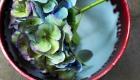 Single beautiful hydrangea flowers