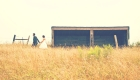 Bride and groom in a cornfield on their wedding day
