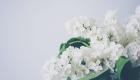 White hand tied flower arrangement in bloom