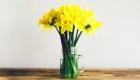Jar of yellow daffodils
