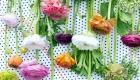 Multicoloured Ranunculus fresh flowers