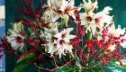 Christmas fresh amaryllis flower arrangement