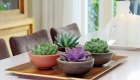 Style your home with plants in ceramic planters