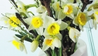 Daffodils and blossom