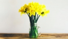 Jar of yellow daffodils