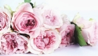 Pink garden roses, perfect for Mother's Day