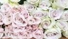 Avalanche, Menta & Fifth Avenue blush roses