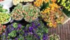 Tulips, daffodils, ranunculus & anemones spring flowers