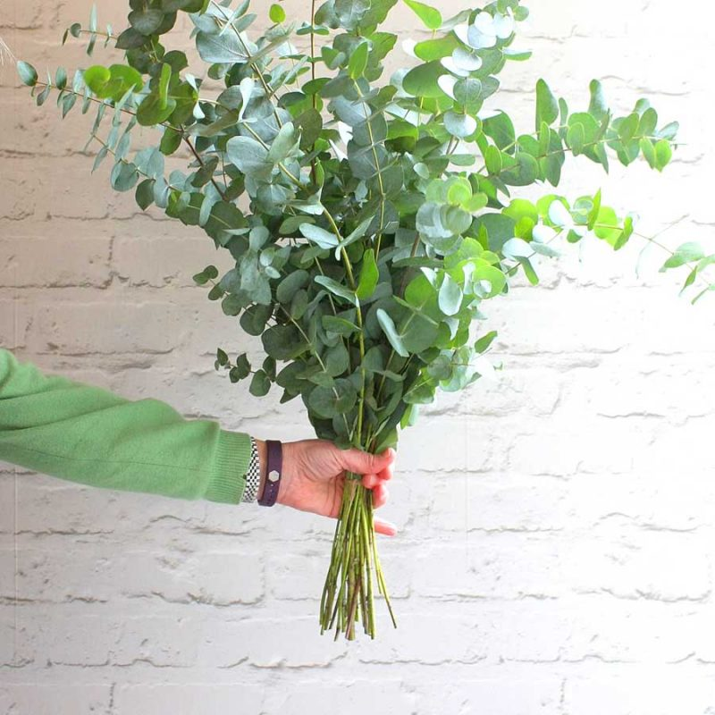 A eucalyptus bouquet is beautifully scented & is long-lasting